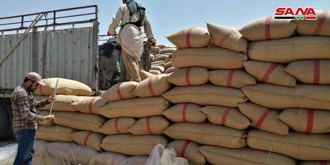 البدء ببيع البذار المعقمة للفلاحين في درعا