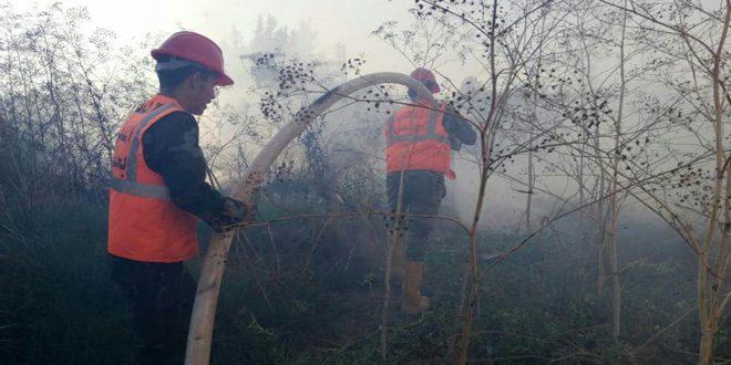 إخماد خمسة حرائق طالت أشجاراً حراجية ومثمرة في حمص