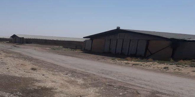 إحداث مركز لاستلام وتجميع الأقطان في محافظة الحسكة