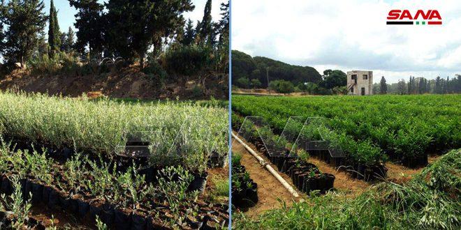الزراعة تحدد أسعار الغراس المثمرة والحراجية للبيع المحلي والمعدة للتصدير لموسم 2020-2021