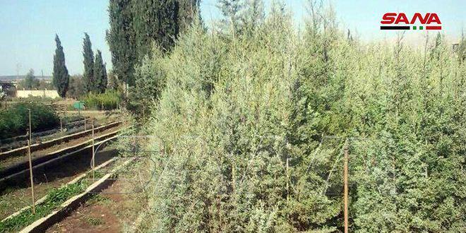 زراعة حمص: نحو 150 هكتاراً المساحة المقترحة بخطة التحريج الاصطناعي