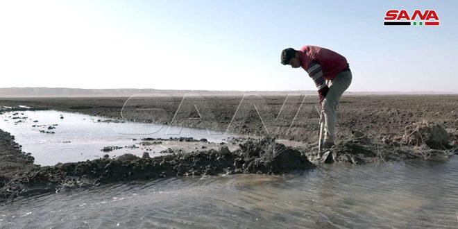 تنفيذ كامل الخطة الزراعية لمحصول القمح في دير الزور