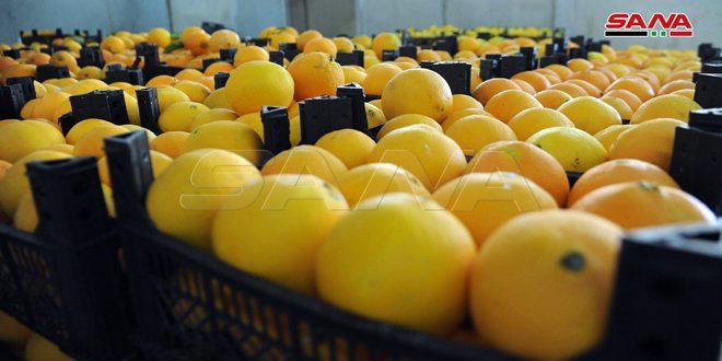 فتح باب انتساب الشركات المصدرة للمنتجات الزراعية إلى برنامج الاعتمادية لتسويق موسم الحمضيات بداية آذار