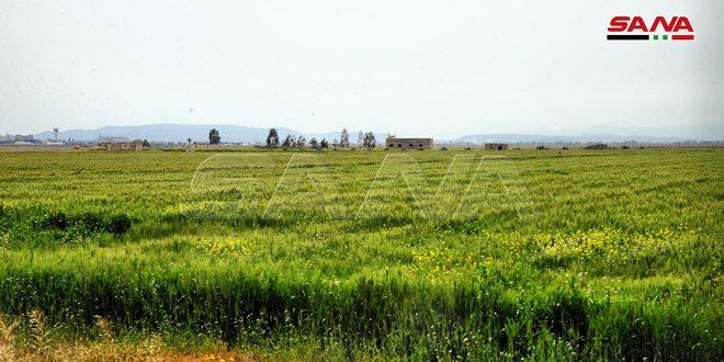 زراعة الحسكة: لا أضرار على المحاصيل المزروعة جراء موجة الصقيع