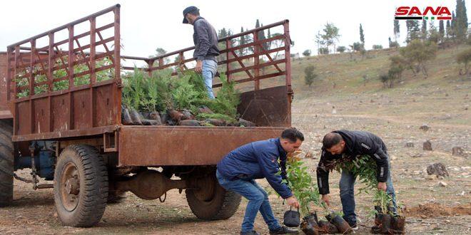 تحريج نحو 320 هكتاراً بالغراس الحراجية في درعا