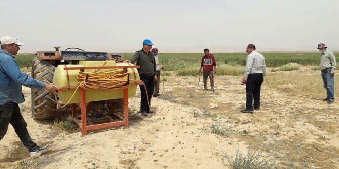 زراعة حمص تتخذ جملة من الإجراءات لمنع وصول الجراد الصحراوي إلى أراضي المحافظة