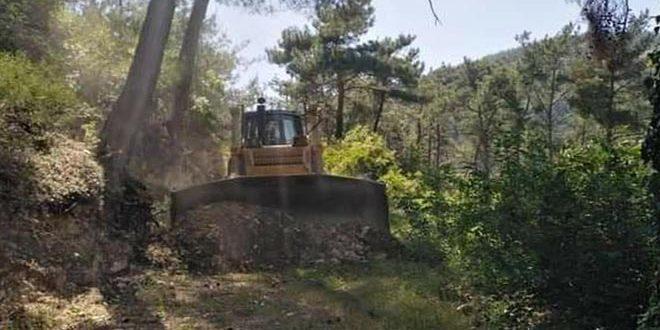 وزارة الزراعة تضع خطة لحماية الغابات من الحرائق