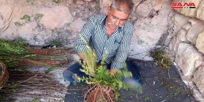 رجل ستيني يصنع قطعاً تراثية بأعواد من الريحان