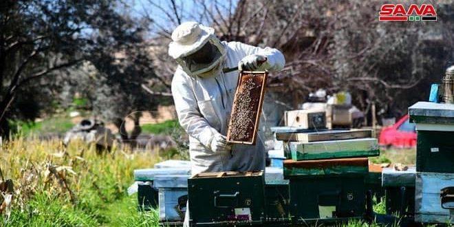بزيادة 3 أضعاف عن الموسم السابق… خمسة آلاف طن إنتاج العسل